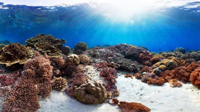 The best diving spots you will find for example in a coral triangle located in Indonesia