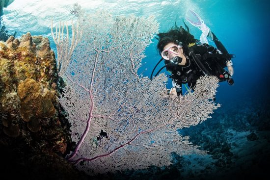Read on for our top 6 ways to learn to dive and begin your adventure now.