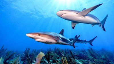 11 top ways to save sharks